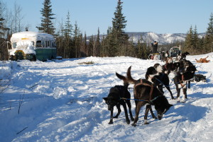 Dog Team at Sushana Bus along Stampede Trail