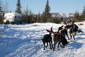 Dog Team at Sushana Bus along Stampede Trail